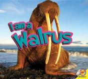 I Am a Walrus (I Am)