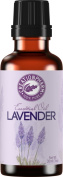 Creation Pharm Lavender Oil 30 Ml-100% Pure Premium Lavender Essential Oil