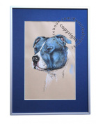 Staffordshire Bull terrier, unique graphics, mixed media, poster, limited edition collection