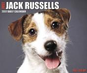 2017 Just Jack Russells Box Calendar