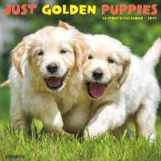 Just Golden Puppies 2017 Wall Calendar