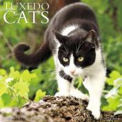 Just Tuxedo Cats
