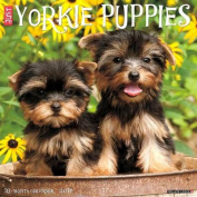 2017 Just Yorkie Puppies Wall Calendar