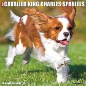 Just Cavalier King Charles Spaniels