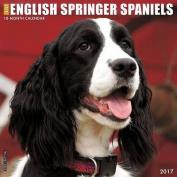 Just English Springer Spaniels