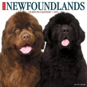Just Newfoundlands 2017 Wall Calendar
