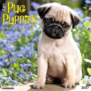 Just Pug Puppies 2017 Wall Calendar