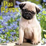 Just Pug Puppies 2017 Wall Calendar