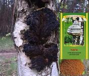 Chaga Pilz Birch mushroom Tschaga Pilz Piptoporus betulinus 50 g