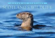 Scotland's Wildlife