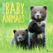 Cal 2017 Baby Animals