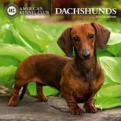 Cal 2017 Dachshunds American Kennel Club
