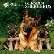 Cal 2017 German Shepherds American Kennel Club