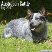 Australian Cattle Dog Calendar 2017