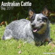 Australian Cattle Dog Calendar 2017