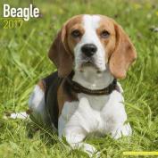 Beagle Calendar 2017