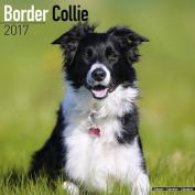 Border Collie Calendar 2017