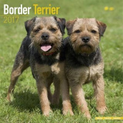 Border Terrier Calendar 2017