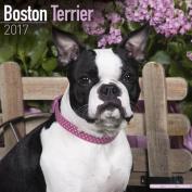 Boston Terrier Calendar 2017