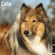 Collie Calendar 2017