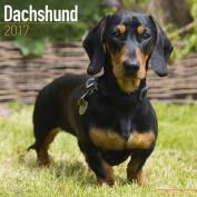 Dachshund Calendar 2017