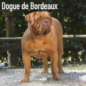 Dogue de Bordeaux Calendar 2017