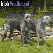 Irish Wolfhound Calendar 2017