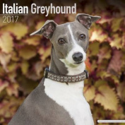 Italian Greyhound Calendar 2017