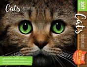 Cats: 2017 Calendar