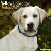 Yellow Labrador Retriever Calendar 2017