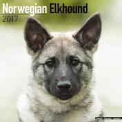 Norwegian Elkhound Calendar 2017