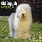 Old English Sheepdog Calendar 2017