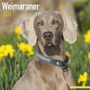 Weimaraner Calendar 2017