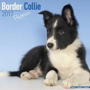 Border Collie Puppies Calendar 2017