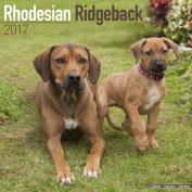 Rhodesian Ridgeback Calendar 2017