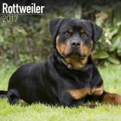 Rottweiler Calendar 2017