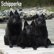 Schipperke Calendar 2017