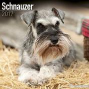 Schnauzer Calendar 2017