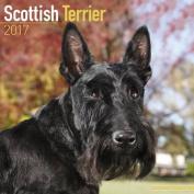 Scottish Terrier Calendar 2017