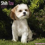 Shih Tzu Calendar 2017