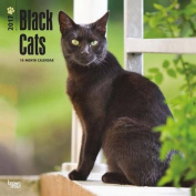Black Cats 2017 Square