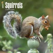 Squirrels 2017 Square