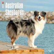 Australian Shepherds 2017 Square