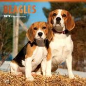Beagles 2017 Square
