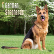 German Shepherds 2017 Square