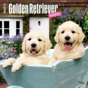 Golden Retriever Puppies 2017 Square