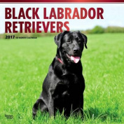 Labrador Retrievers, Black