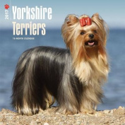 Yorkshire Terriers 2017 Square