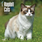 Ragdoll Cats 2017 Square