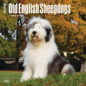 Old English Sheepdogs 2017 Square